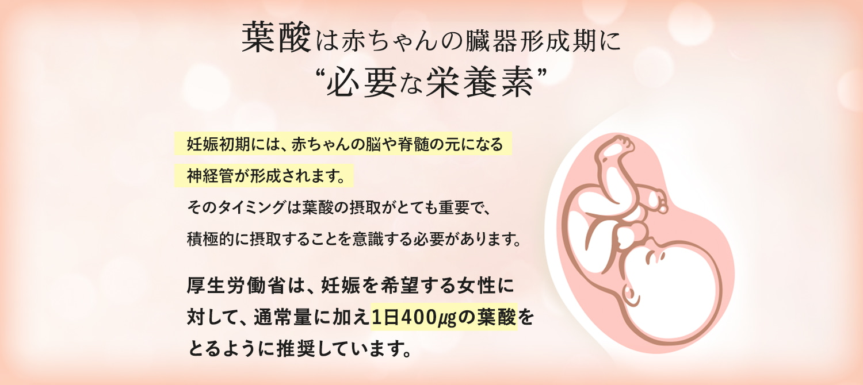 葉酸は赤ちゃんの臓器形成期に必要な栄養素。妊娠初期には赤ちゃんの脳や脊髄の元になる神経管が形成されます。厚生労働省は妊娠を希望する女性に対して、通常量に加え1日400㎍の葉酸を摂るように推奨しています。